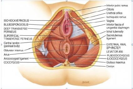 Leaking urine: weak or tight pelvic floor?